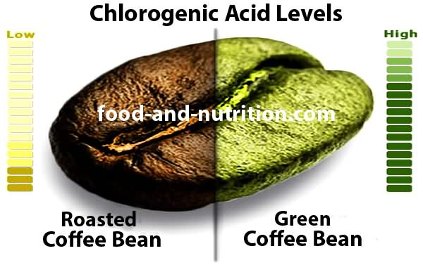 Chlorogenic Acid Coffee Bean