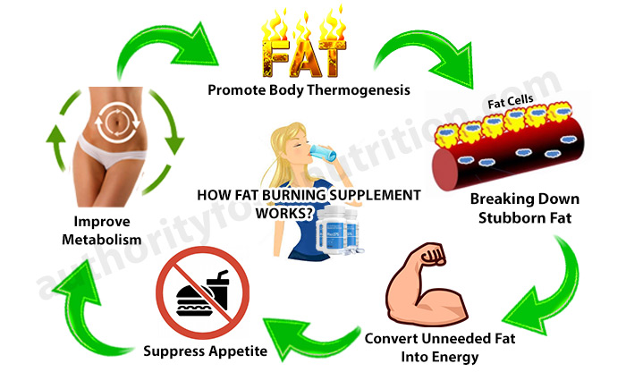 How Fat Burning Supplement Works